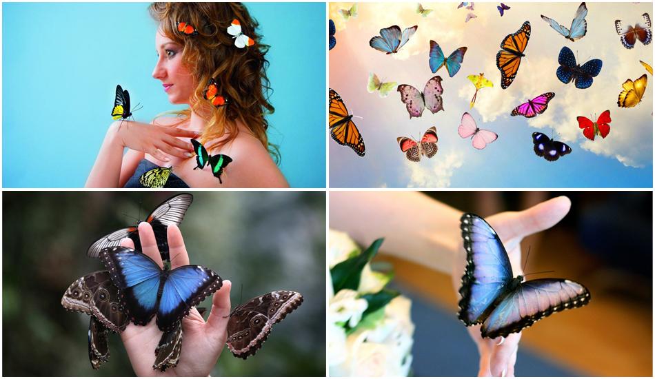 Живые бабочки - оригинальный подарок